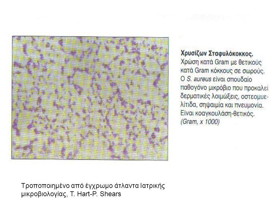 Τροποποιημένο από έγχρωμο άτλαντα Ιατρικής μικροβιολογίας, T. Hart-P