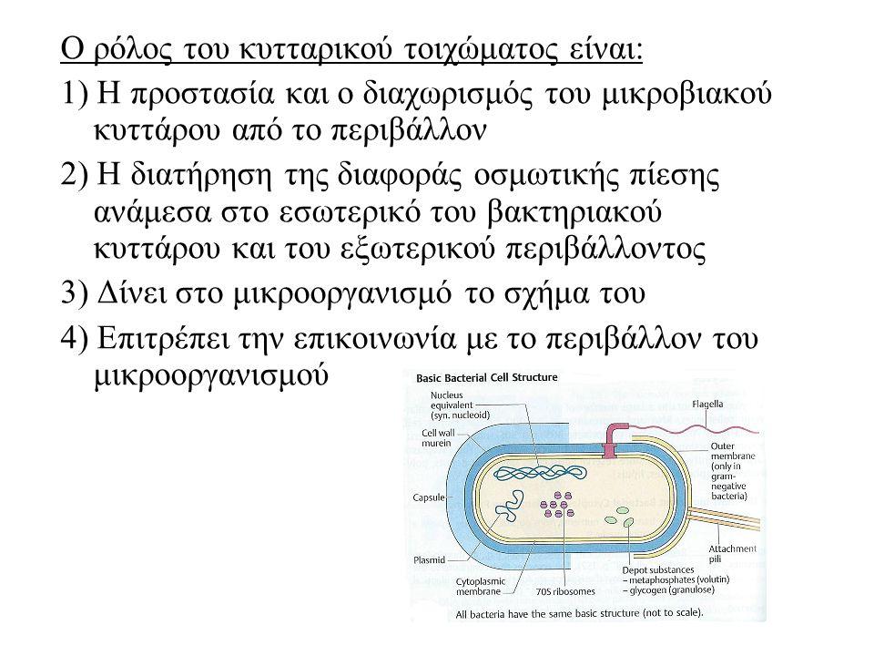 Ο ρόλος του κυτταρικού τοιχώματος είναι: