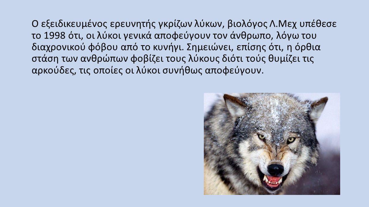 Ο εξειδικευμένος ερευνητής γκρίζων λύκων, βιολόγος Λ