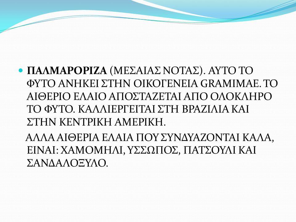ΠΑΛΜΑΡΟΡΙΖΑ (ΜΕΣΑΙΑΣ ΝΟΤΑΣ)