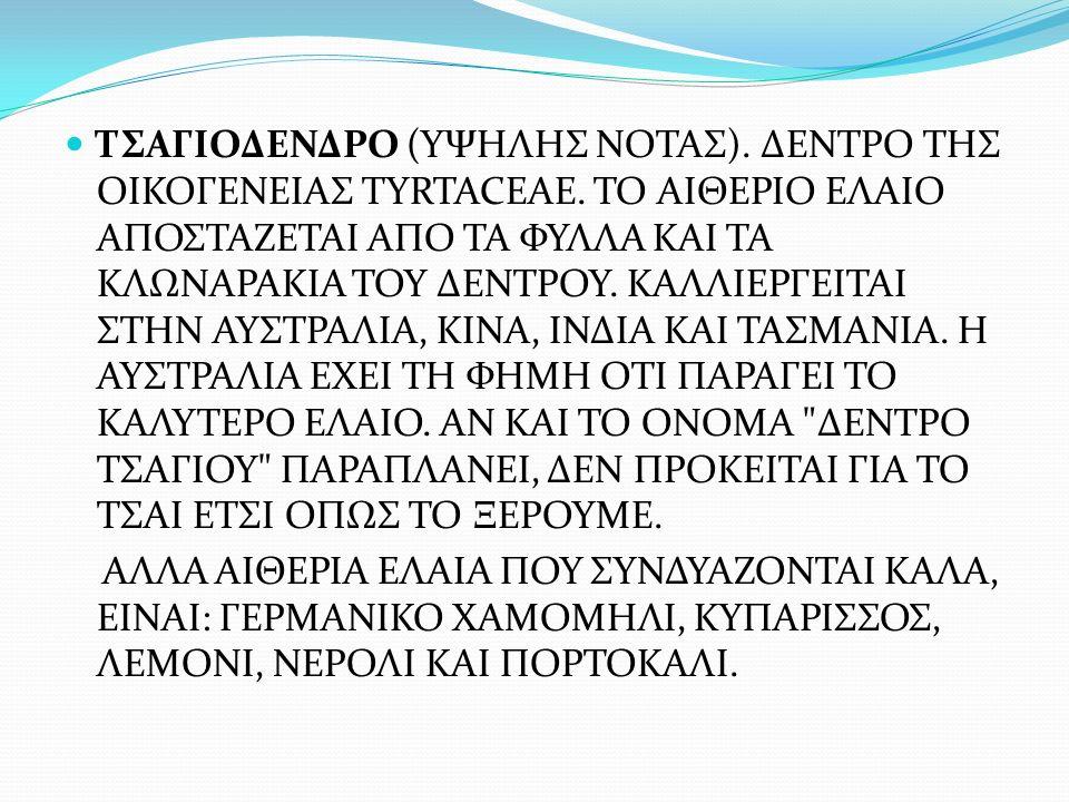 ΤΣΑΓΙΟΔΕΝΔΡΟ (ΥΨΗΛΗΣ ΝΟΤΑΣ). ΔΕΝΤΡΟ ΤΗΣ ΟΙΚΟΓΕΝΕΙΑΣ TYRTACEAE