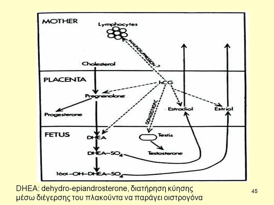 DHEA: dehydro-epiandrosterone, διατήρηση κύησης μέσω διέγερσης του πλακούντα να παράγει οιστρογόνα