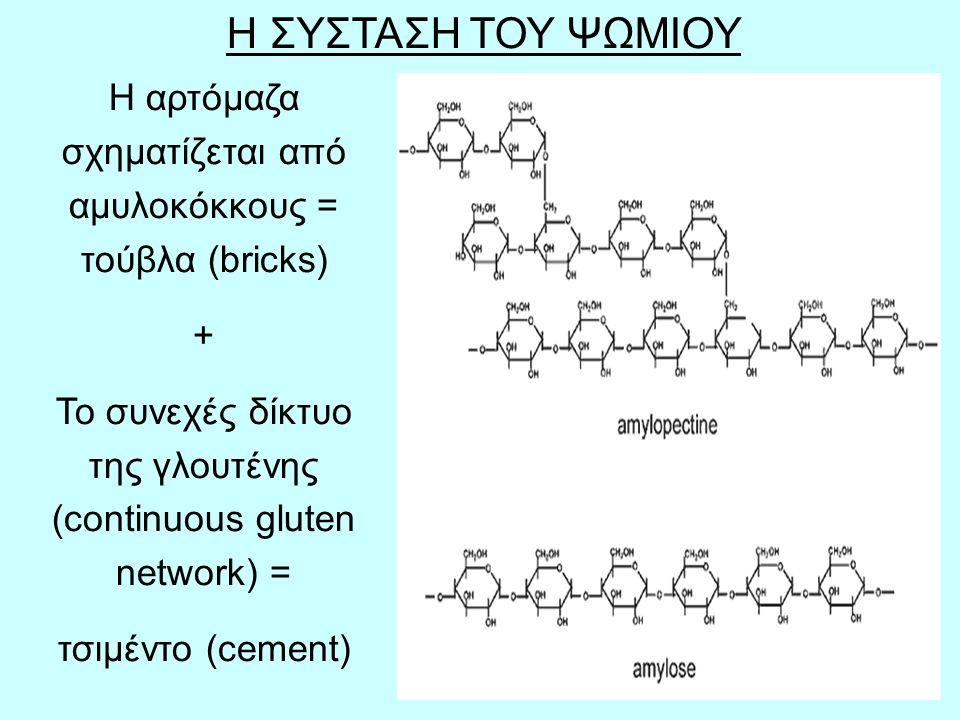 Η ΣΥΣΤΑΣΗ ΤΟΥ ΨΩΜΙΟΥ Η αρτόμαζα σχηματίζεται από αμυλοκόκκους = τούβλα (bricks) + Το συνεχές δίκτυο της γλουτένης (continuous gluten network) =
