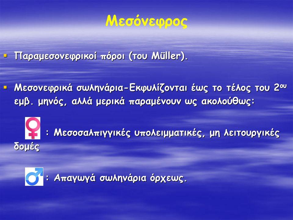 Μεσόνεφρος Παραμεσονεφρικοί πόροι (του Müller).