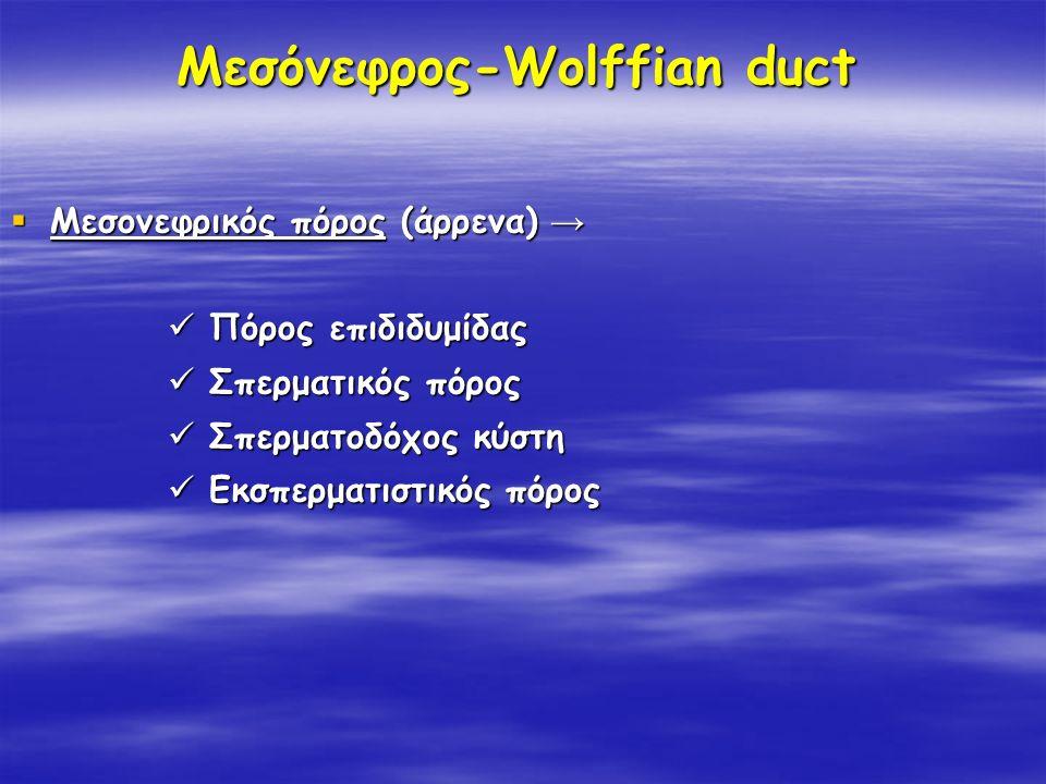 Μεσόνεφρος-Wolffian duct