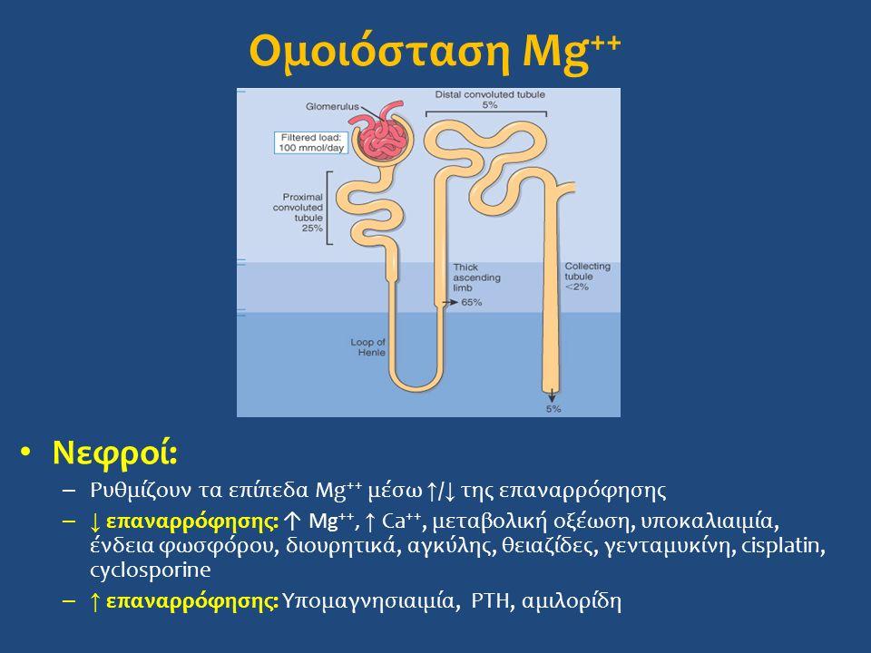 Ομοιόσταση Mg++ Νεφροί: