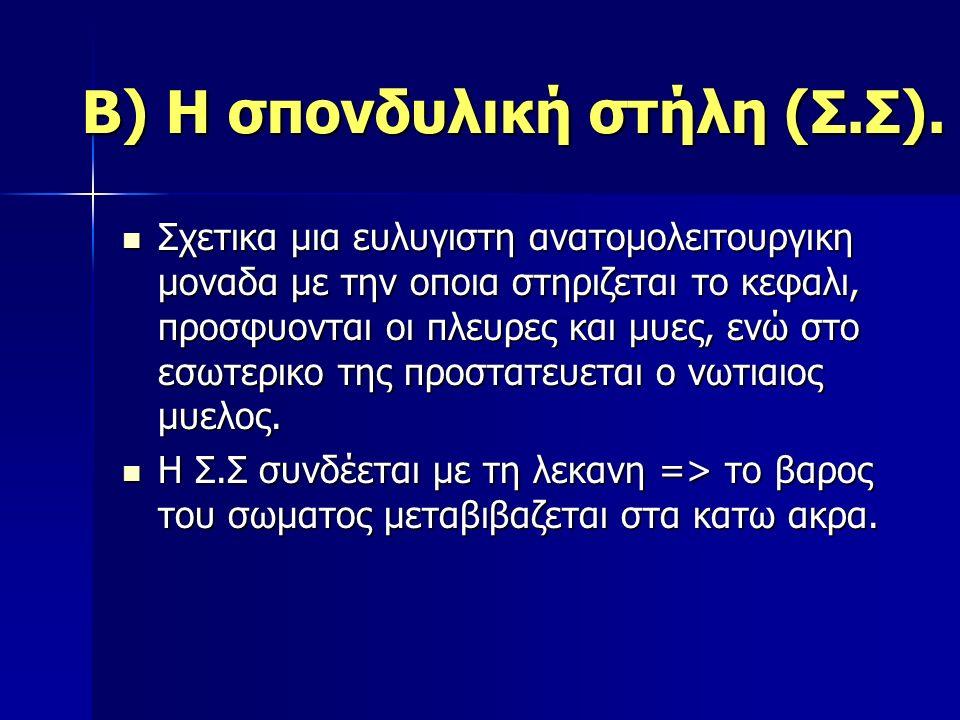 Β) Η σπονδυλική στήλη (Σ.Σ).