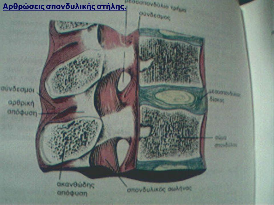 Αρθρώσεις σπονδυλικής στήλης.