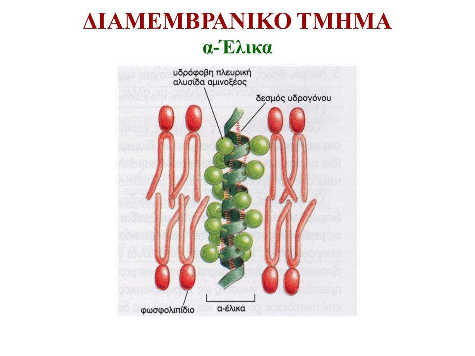 ΔΙΑΜΕΜΒΡΑΝΙΚΟ ΤΜΗΜΑ α-Έλικα