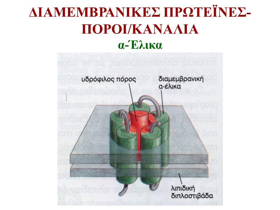 ΔΙΑΜΕΜΒΡΑΝΙΚΕΣ ΠΡΩΤΕΪΝΕΣ-ΠΟΡΟΙ/ΚΑΝΑΛΙΑ