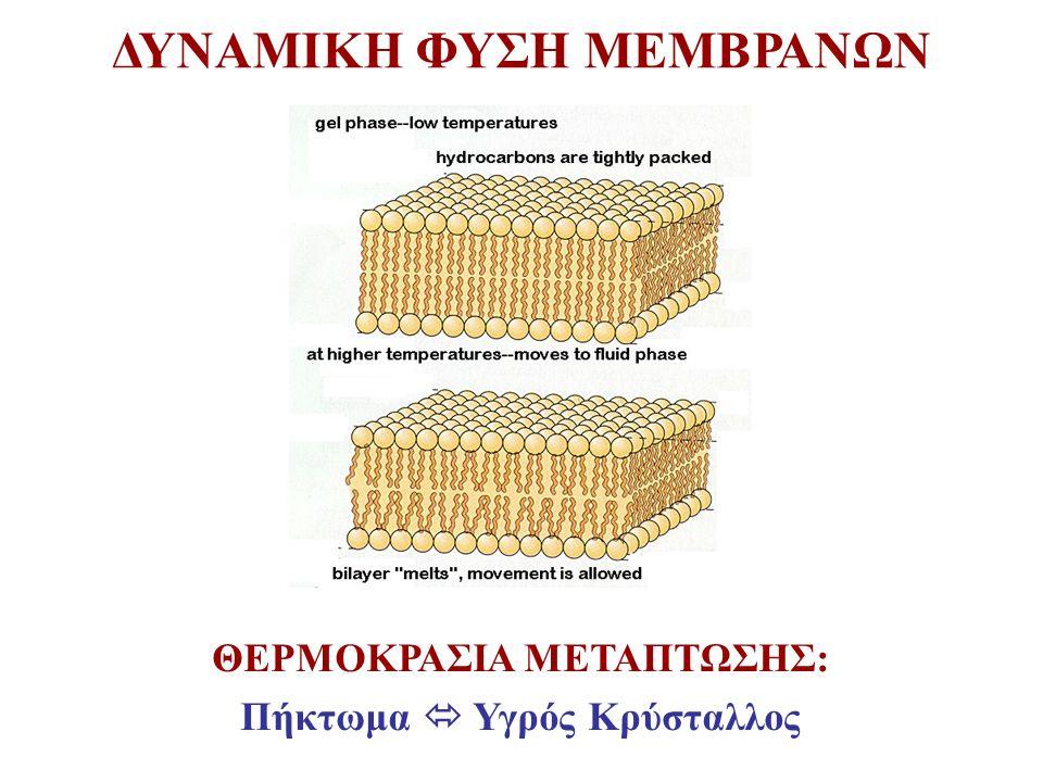 ΔΥΝΑΜΙΚΗ ΦΥΣΗ ΜΕΜΒΡΑΝΩΝ