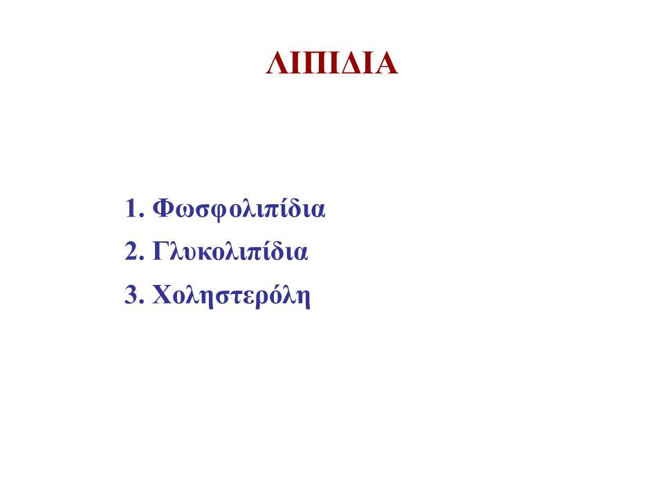 ΛΙΠΙΔΙΑ Φωσφολιπίδια 2. Γλυκολιπίδια 3. Χοληστερόλη