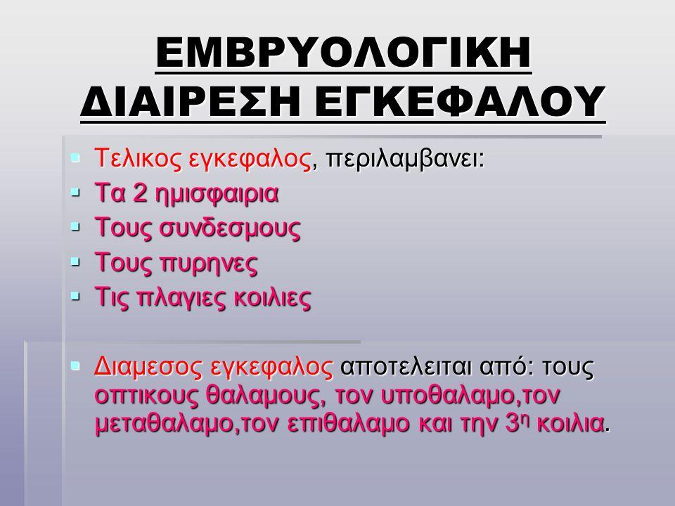 ΕΜΒΡΥΟΛΟΓΙΚΗ ΔΙΑΙΡΕΣΗ ΕΓΚΕΦΑΛΟΥ
