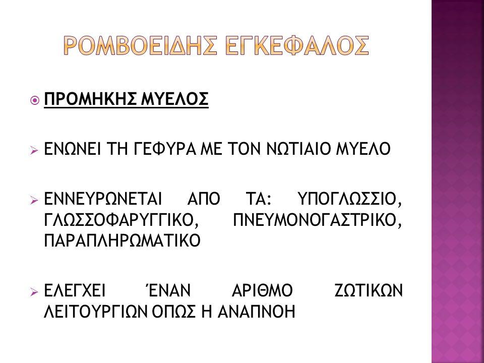 ΡΟΜΒΟΕΙΔΗΣ ΕΓΚΕΦΑΛΟΣ ΠΡΟΜΗΚΗΣ ΜΥΕΛΟΣ
