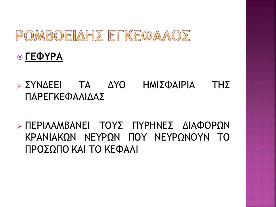 ΡΟΜΒΟΕΙΔΗΣ ΕΓΚΕΦΑΛΟΣ ΓΕΦΥΡΑ