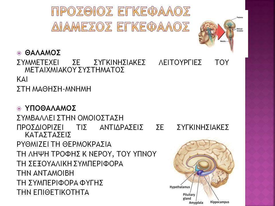 Προσθιοσ εγκεφαλοσ ΔΙΑΜΕΣΟΣ ΕΓΚΕΦΑΛΟΣ