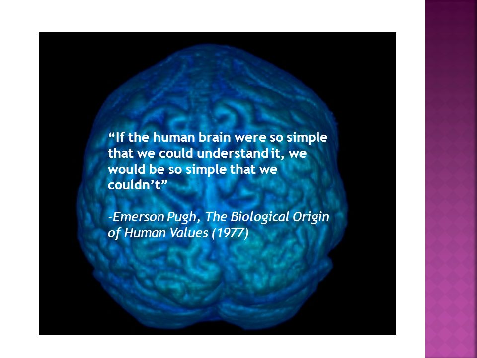 If the human brain were so simple that we could understand it, we would be so simple that we couldn't
