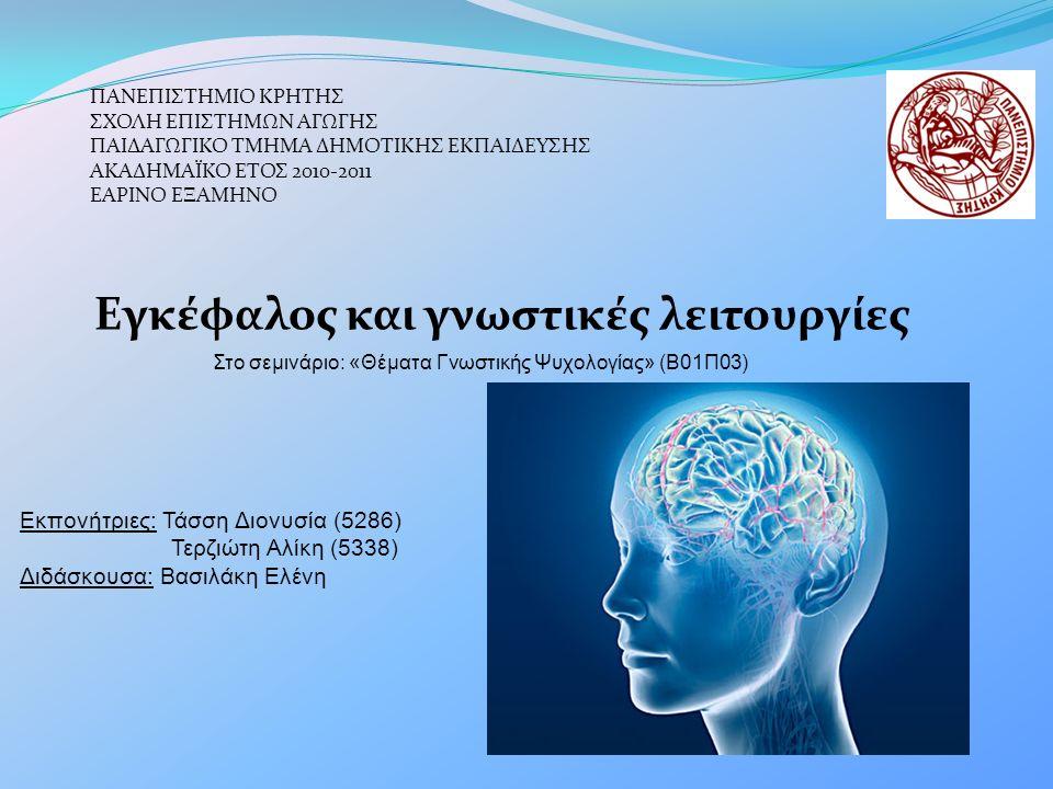 Εγκέφαλος και γνωστικές λειτουργίες