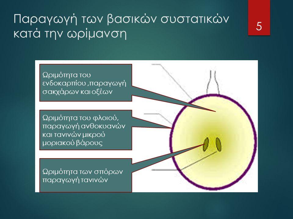 Παραγωγή των βασικών συστατικών κατά την ωρίμανση