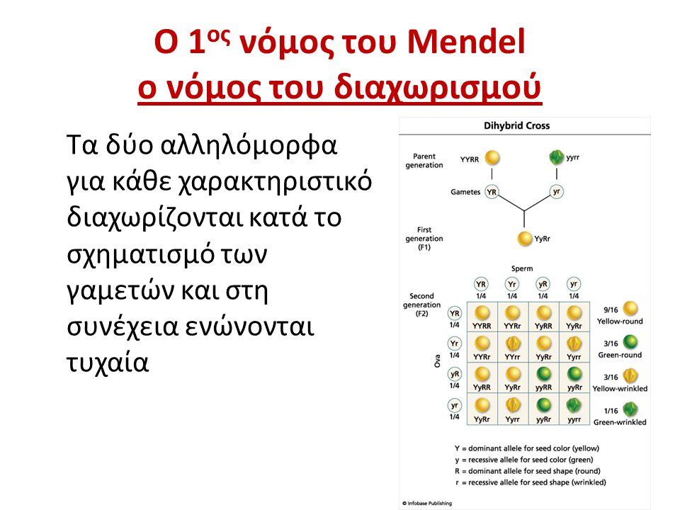 Ο 1ος νόμος του Mendel ο νόμος του διαχωρισμού