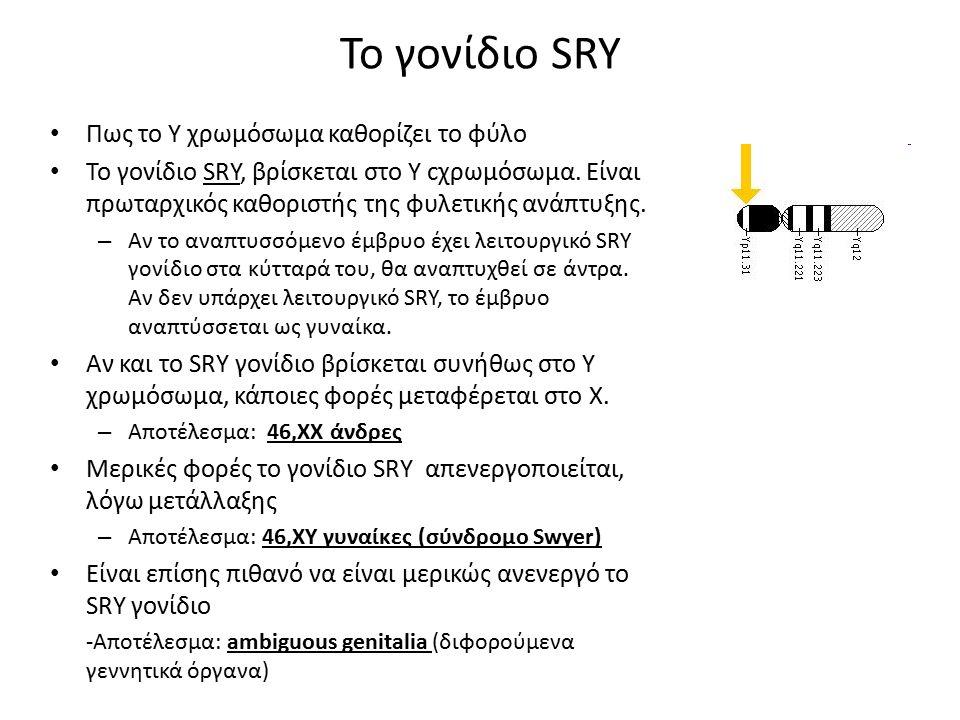 Το γονίδιο SRY Πως το Y χρωμόσωμα καθορίζει το φύλο
