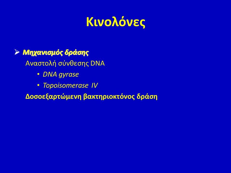 Κινολόνες Μηχανισμός δράσης Αναστολή σύνθεσης DNA DNA gyrase