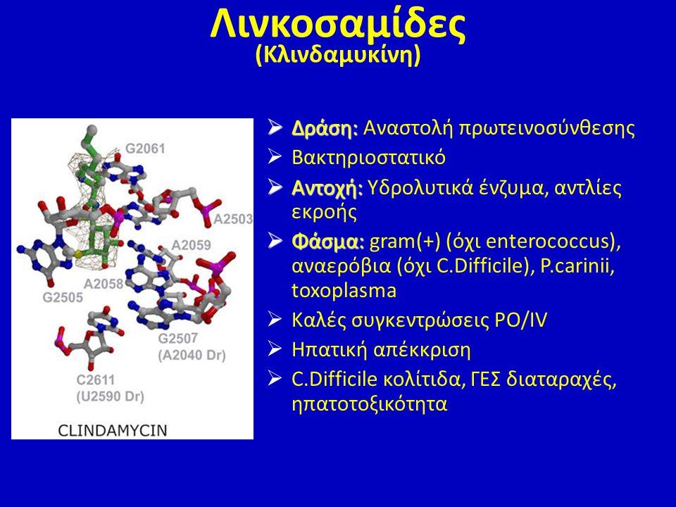Λινκοσαμίδες (Κλινδαμυκίνη)