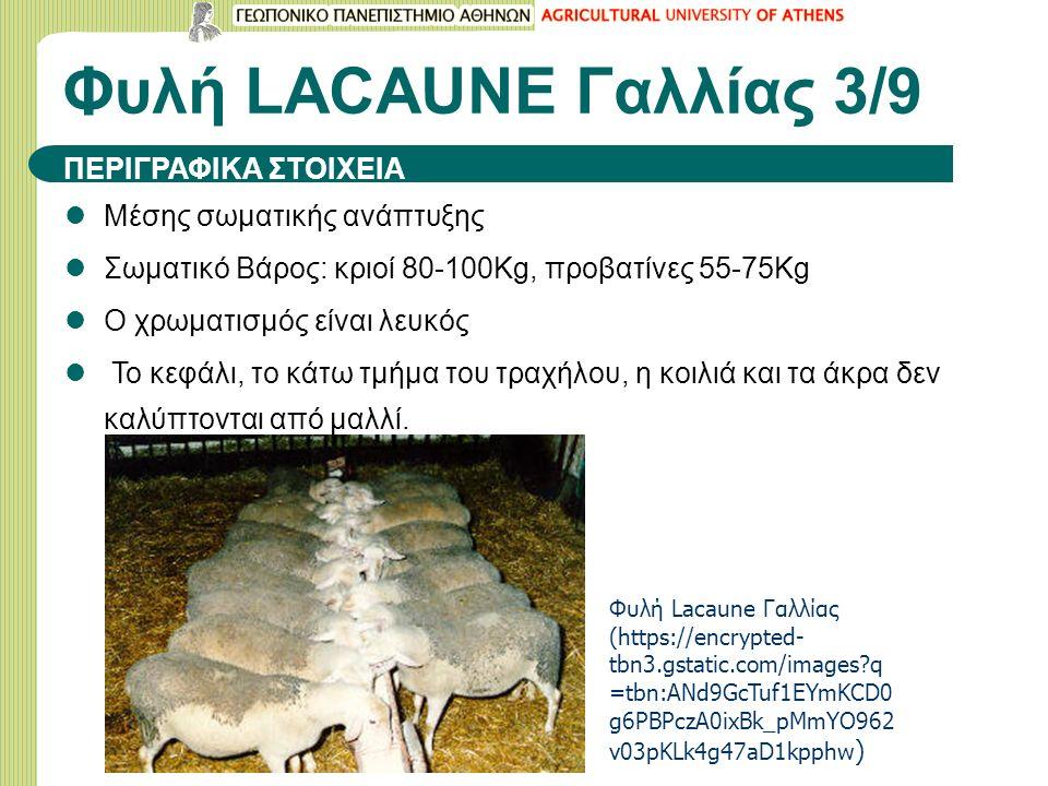 Φυλή LACAUNE Γαλλίας 3/9 ΠΕΡΙΓΡΑΦΙΚΑ ΣΤΟΙΧΕΙΑ