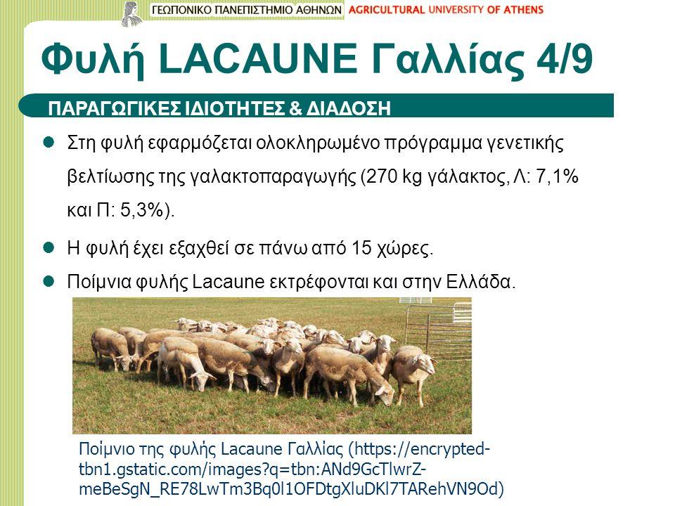Φυλή LACAUNE Γαλλίας 4/9 ΠΑΡΑΓΩΓΙΚΕΣ ΙΔΙΟΤΗΤΕΣ & ΔΙΑΔΟΣΗ