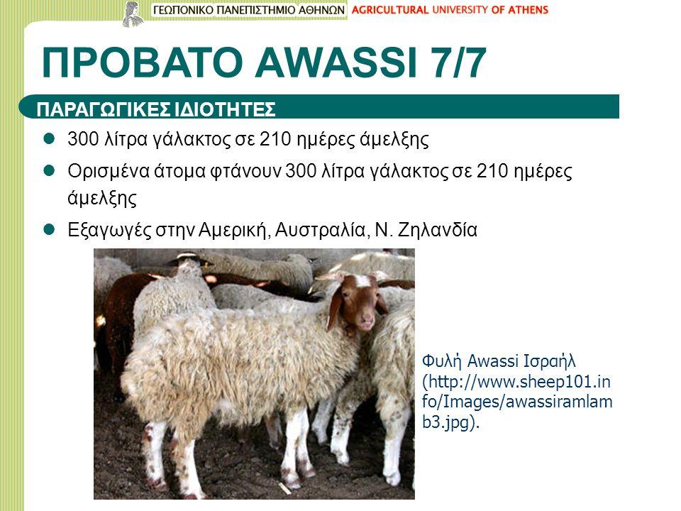ΠΡΟΒΑΤΟ ΑWASSI 7/7 ΠΑΡΑΓΩΓΙΚΕΣ ΙΔΙΟΤΗΤΕΣ