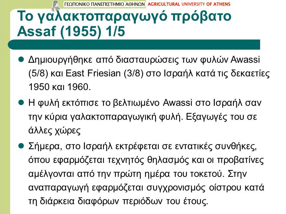 Το γαλακτοπαραγωγό πρόβατο Assaf (1955) 1/5