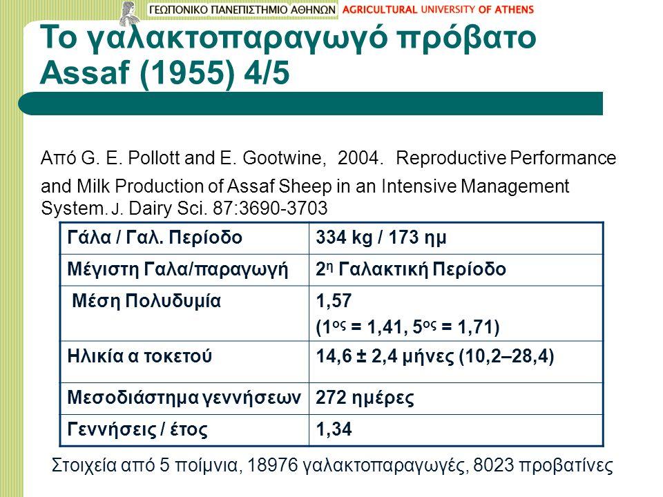 Το γαλακτοπαραγωγό πρόβατο Assaf (1955) 4/5