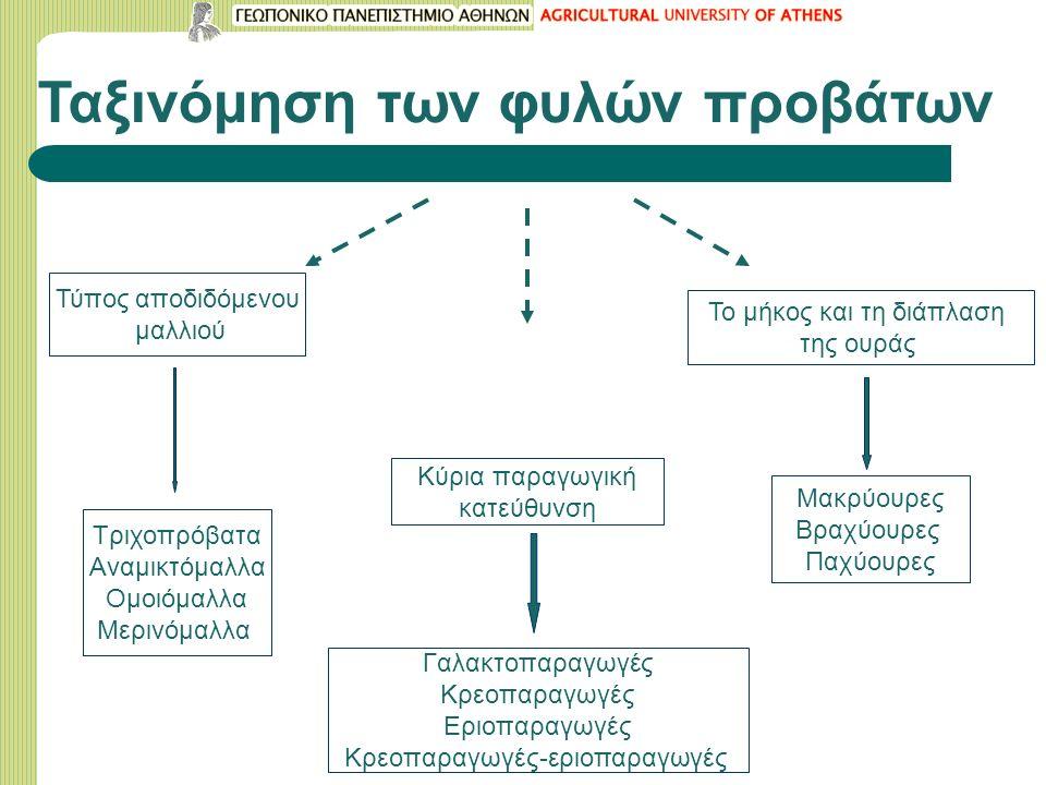 Ταξινόμηση των φυλών προβάτων
