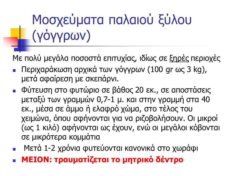 Μοσχεύματα παλαιού ξύλου (γόγγρων)