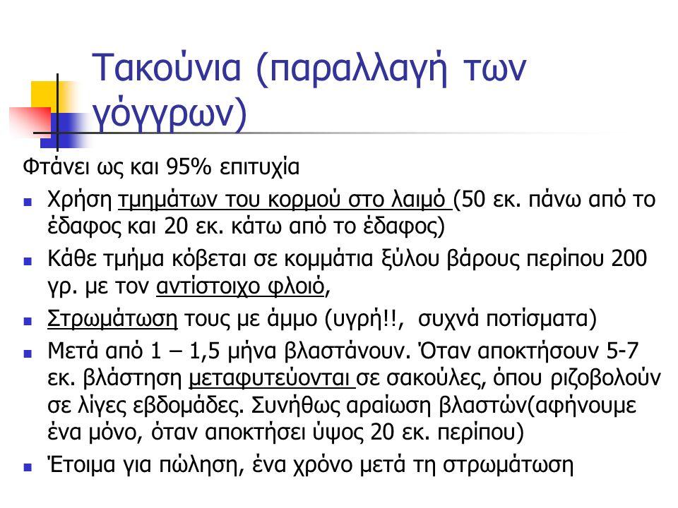 Τακούνια (παραλλαγή των γόγγρων)