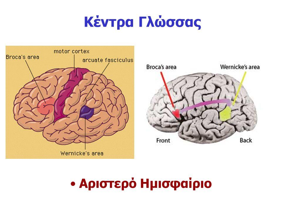 Κέντρα Γλώσσας Αριστερό Ημισφαίριο