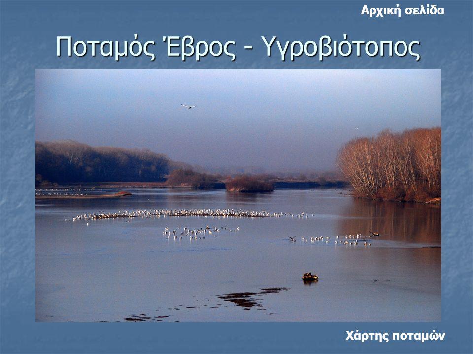 Ποταμός Έβρος - Υγροβιότοπος