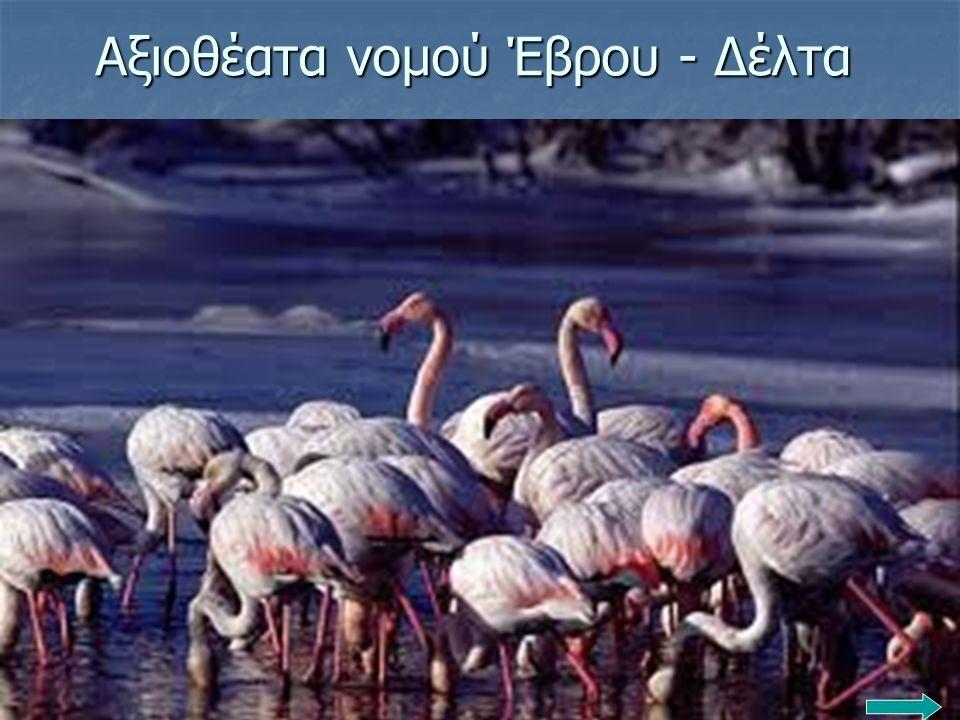 Αξιοθέατα νομού Έβρου - Δέλτα