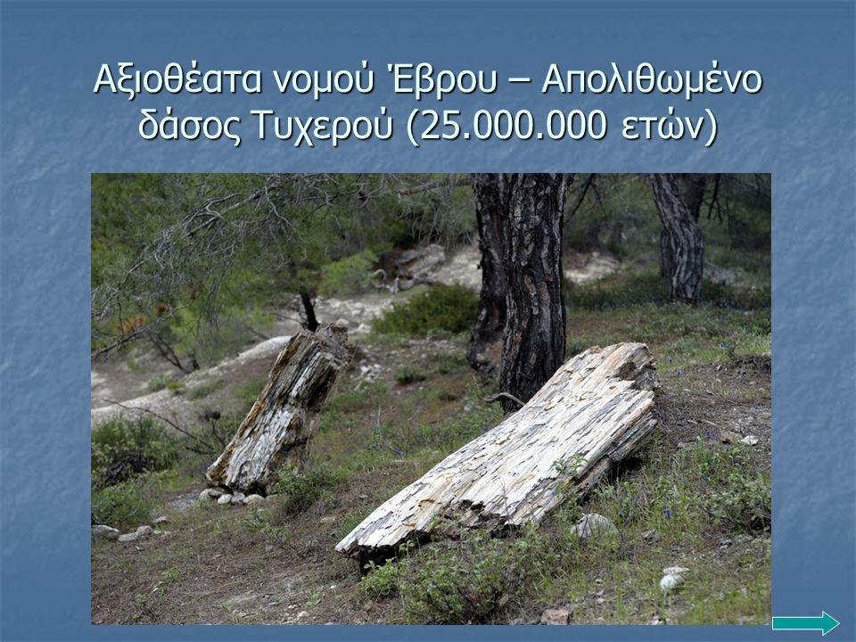 Αξιοθέατα νομού Έβρου – Απολιθωμένο δάσος Τυχερού (25.000.000 ετών)