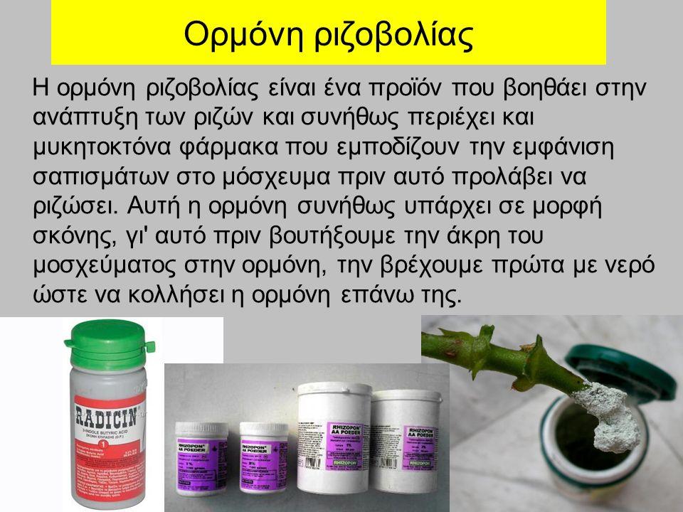Ορμόνη ριζοβολίας