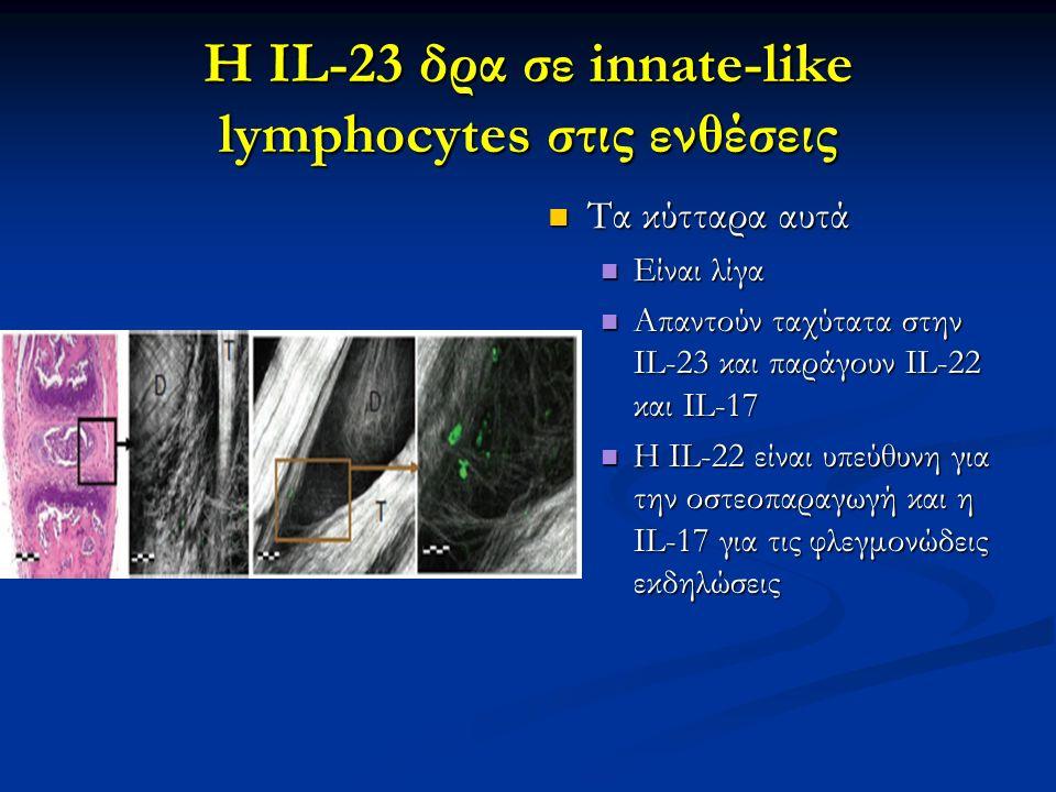 Η IL-23 δρα σε innate-like lymphocytes στις ενθέσεις