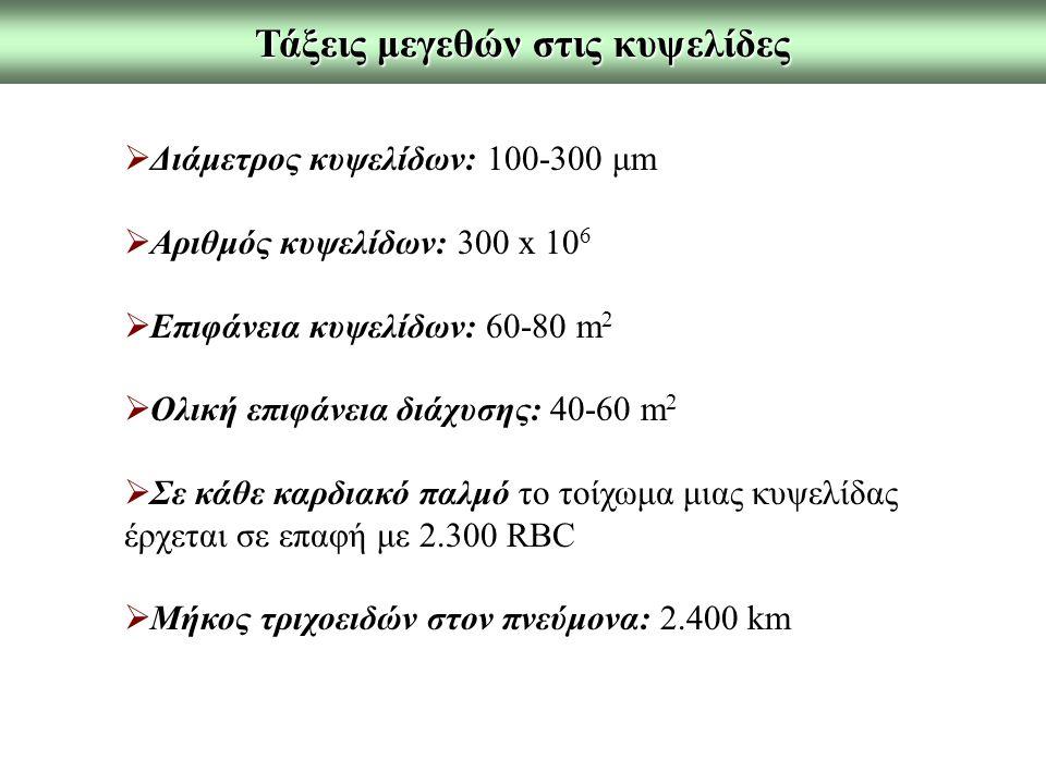 Τάξεις μεγεθών στις κυψελίδες
