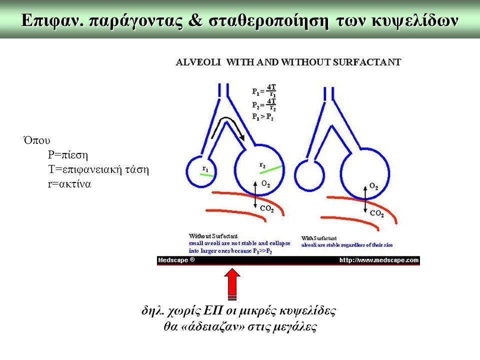 Επιφαν. παράγοντας & σταθεροποίηση των κυψελίδων