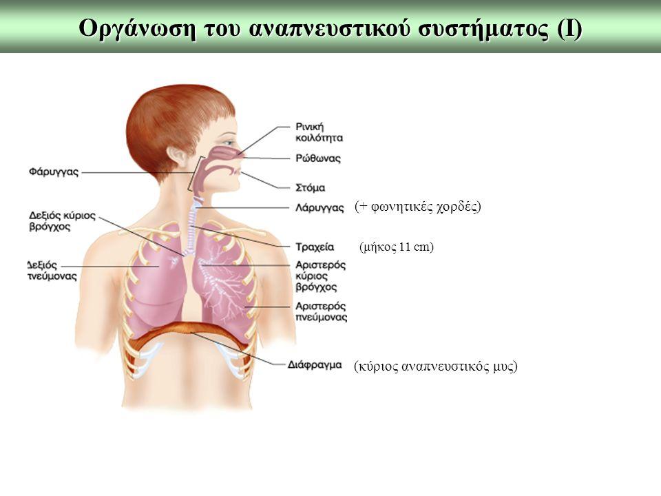 Οργάνωση του αναπνευστικού συστήματος (Ι)