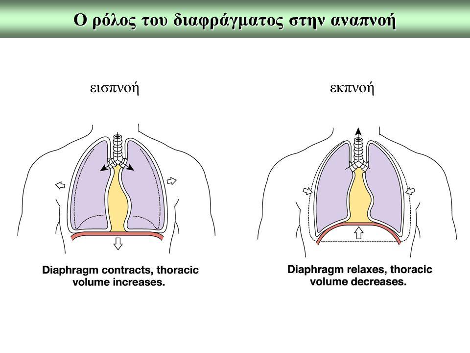 O ρόλος του διαφράγματος στην αναπνοή