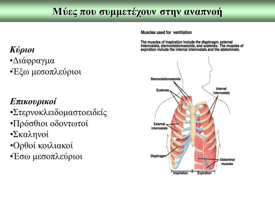 Μύες που συμμετέχουν στην αναπνοή