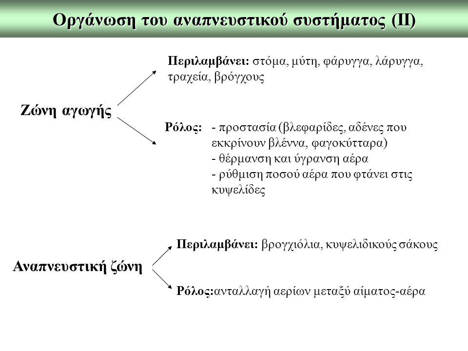Οργάνωση του αναπνευστικού συστήματος (ΙΙ)