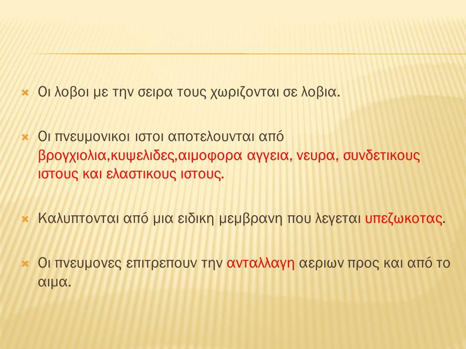 ΥΠΕΖΩΚΟΤΑΣ