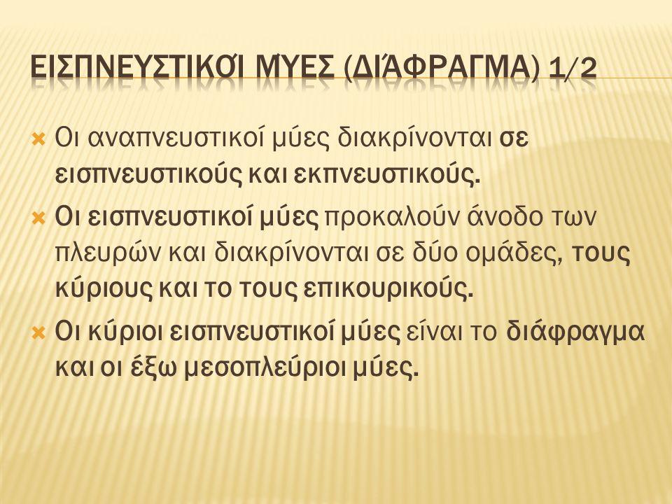 Εισπνευστικοί μύες (διάφραγμα) 2/2