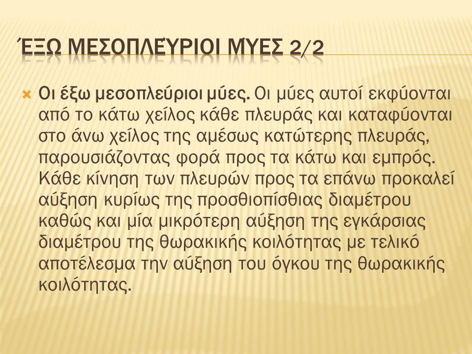 Πλευρές - Νεύρωση μυών 1/2